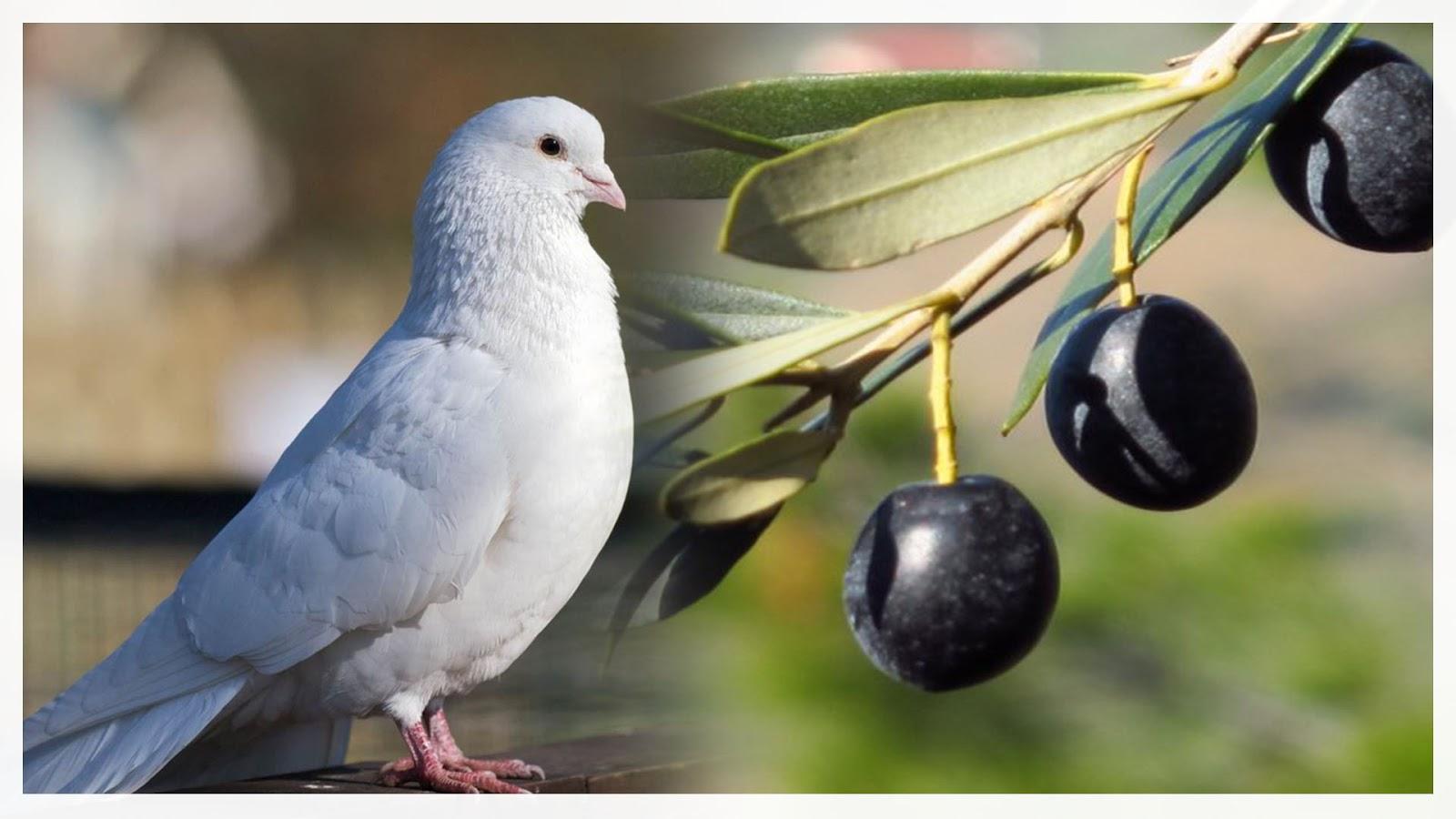 Zeytin Dalı ve Güvercin Neden Barışın Sembolüdür?